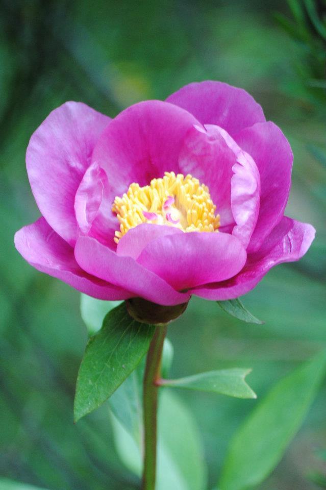 flora-de-zarzalejo-1