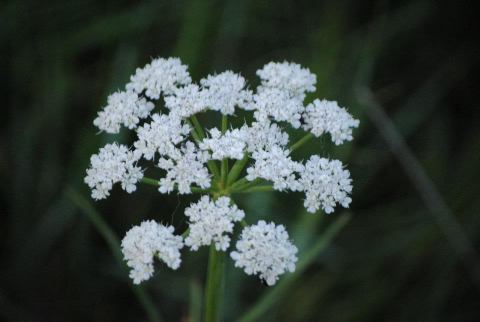 flora-de-zarzalejo-10