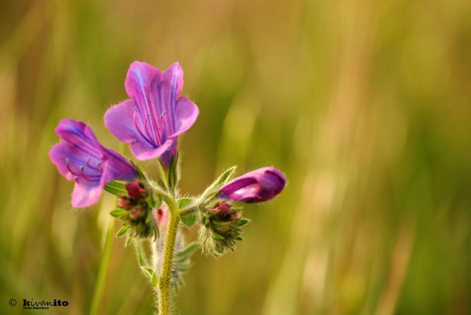 flora-de-zarzalejo-13