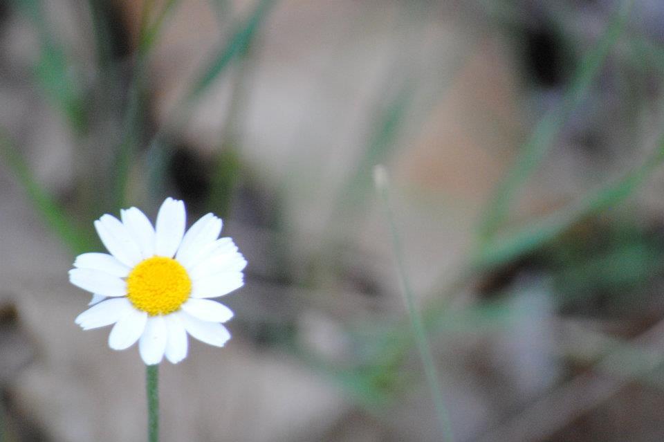 flora-de-zarzalejo-3