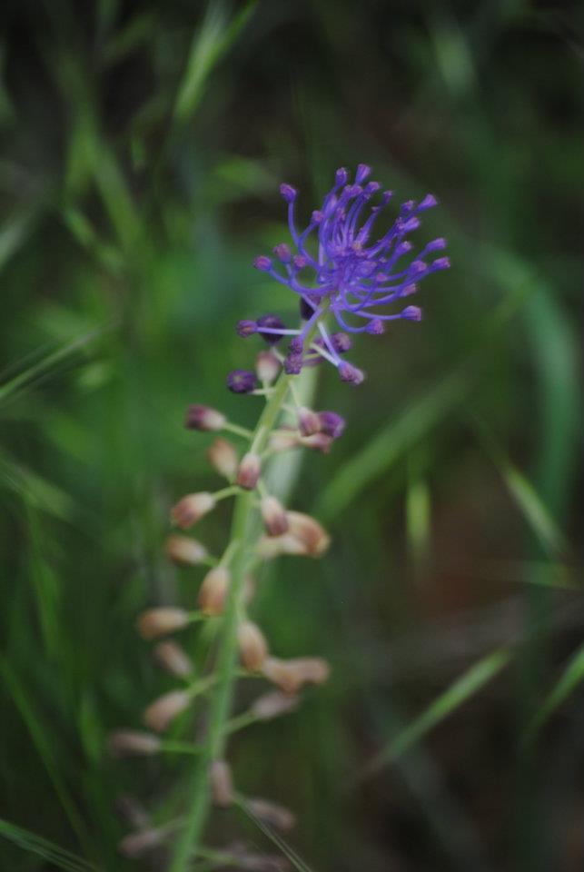 flora-de-zarzalejo-5