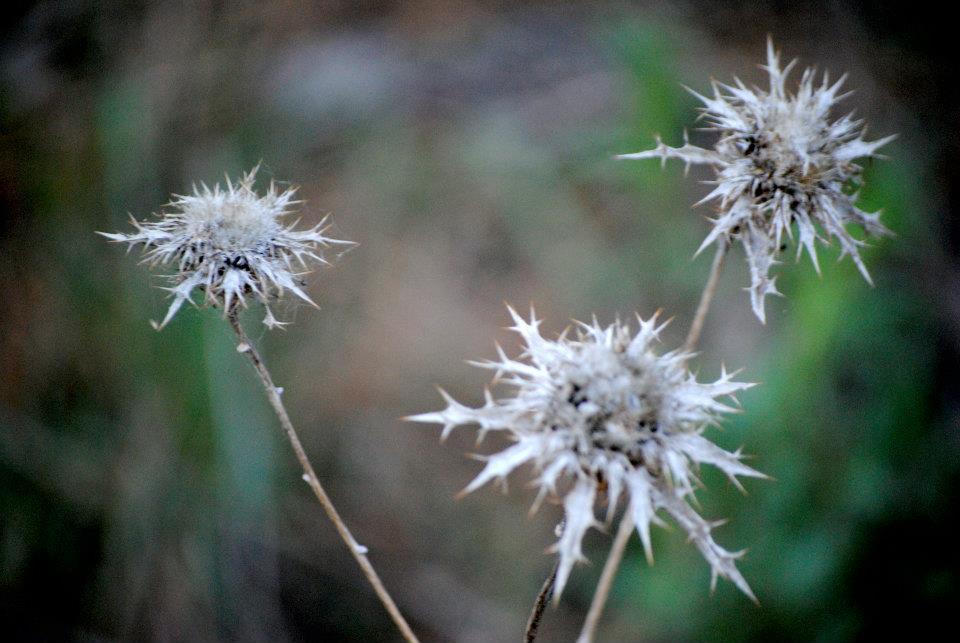 flora-de-zarzalejo-9