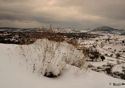 nevada-en-zarzalejo-3
