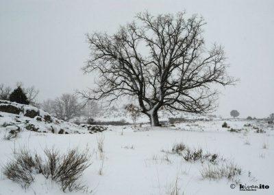 nevada-en-zarzalejo-5