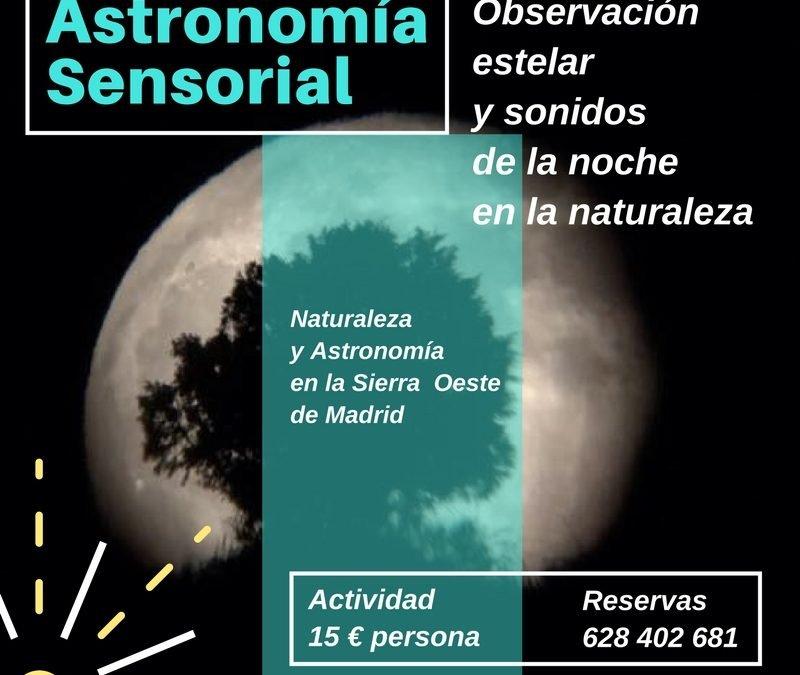 Observación estelar y sonidos de la noche en la naturaleza